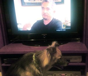 Roxie is lulled into submission by the voice of the Dog Whisperer